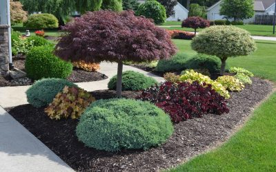 Why It's Important To Mulch Your Plants